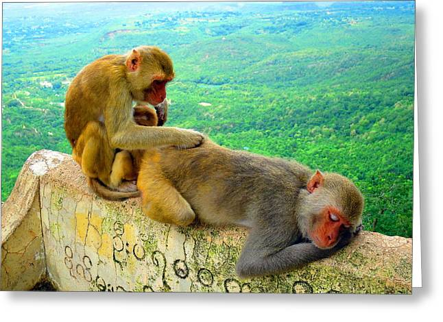 Mount Popa Greeting Cards - This is the Life Greeting Card by Scott Brindle