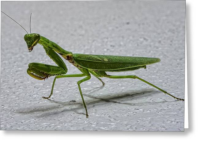 Praying Mantis Greeting Cards - This is the Philippines 3 - Praying Greeting Card by Paul W Sharpe Aka Wizard of Wonders