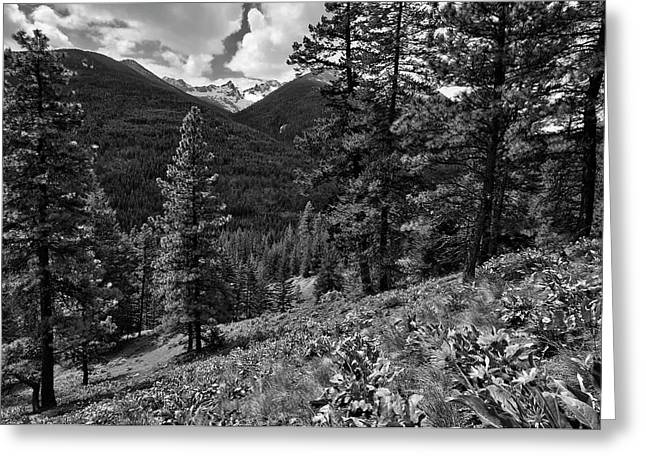 Okanogan National Forest Greeting Cards - This is Washington State No.1B - Klipchuck Greeting Card by Paul W Sharpe Aka Wizard of Wonders