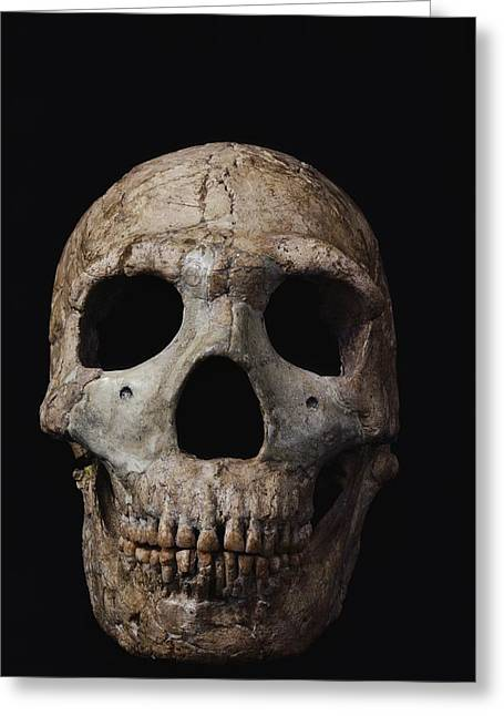 Number Of Objects Greeting Cards - This Neandertal Skull From Wadi Amud Greeting Card by Ira Block