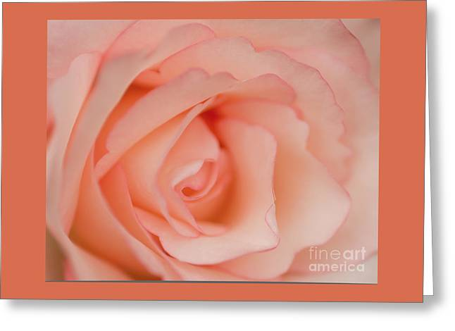 Nature Center Greeting Cards - This Rose Is For You Greeting Card by Nick  Boren