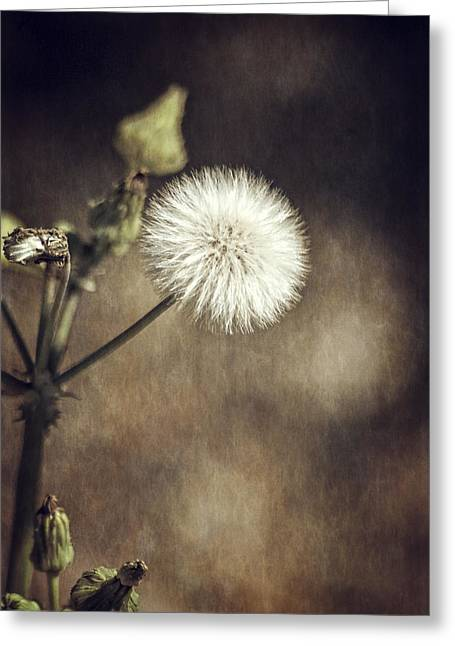 Thistle Greeting Card by Carolyn Marshall