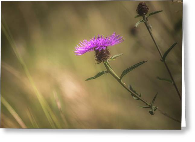 Thistle Greeting Card by Chris Fletcher