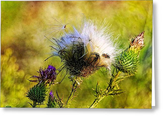 Paint Photograph Greeting Cards - Beetle on Thistle  Greeting Card by Geraldine Scull