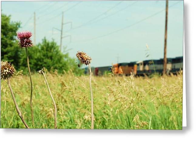 Thistle Rail Greeting Card by Jame Hayes