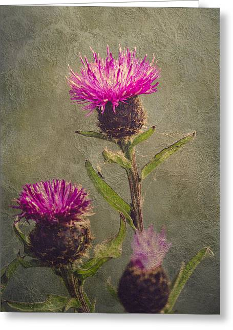 Thistle Greeting Card by Wim Lanclus