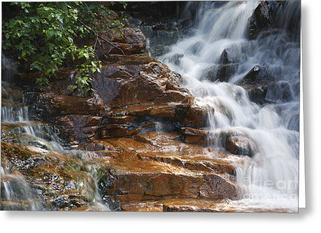 Thoreau Falls - White Mountains New Hampshire  Greeting Card by Erin Paul Donovan