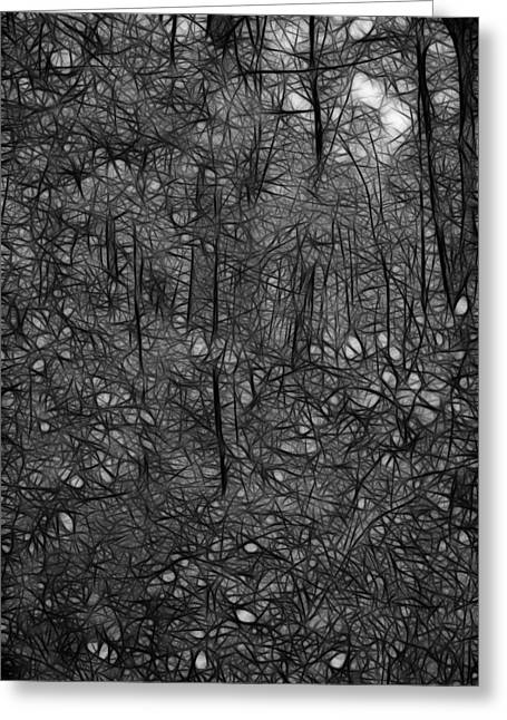 Thoreau Woods Black And White Greeting Card by Lawrence Christopher