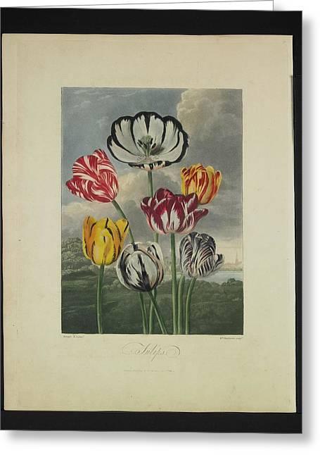 Thornton - Tulips Greeting Card by Pat Kempton