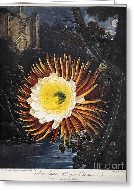 Thornton: Cereus Greeting Card by Granger