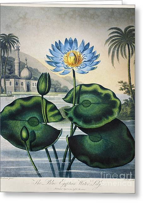 1804 Greeting Cards - Thornton: Water Lily Greeting Card by Granger