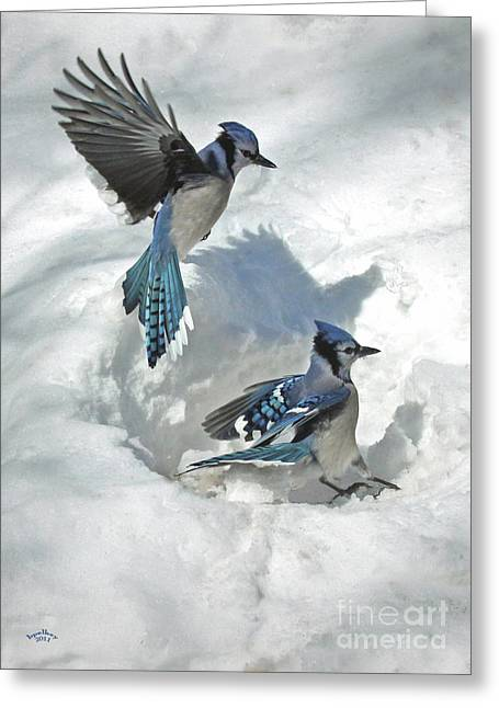 Framed Winter Snow Photograph Greeting Cards - Those Were The Jays Greeting Card by Brian Pelkey