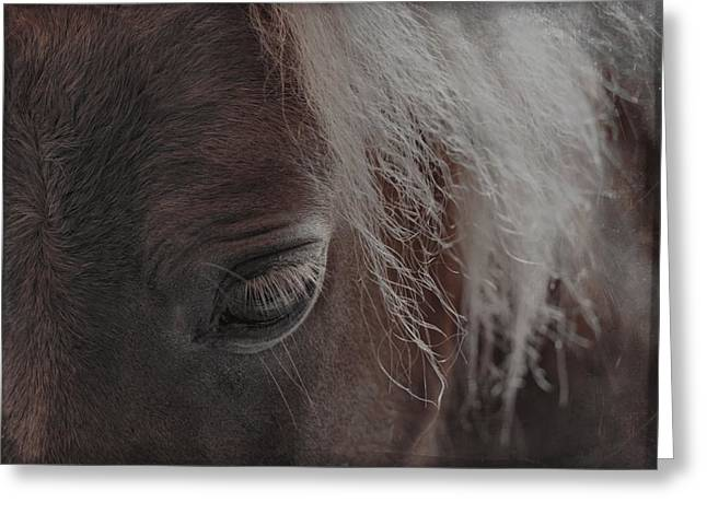Thoughts Of Horse Greeting Card by Gothicolors Donna Snyder