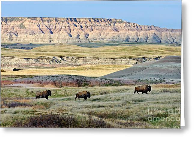Bull Creek Greeting Cards - Three Bison Bulls Greeting Card by Tom and Pat Leeson