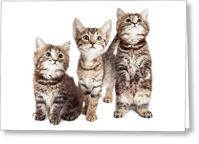 Three Curious Tabby Kittens Together On White Greeting Card by Susan Schmitz