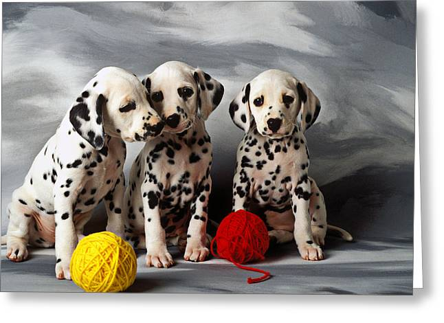 Domestic Pets Greeting Cards - Three Dalmatian puppies  Greeting Card by Garry Gay