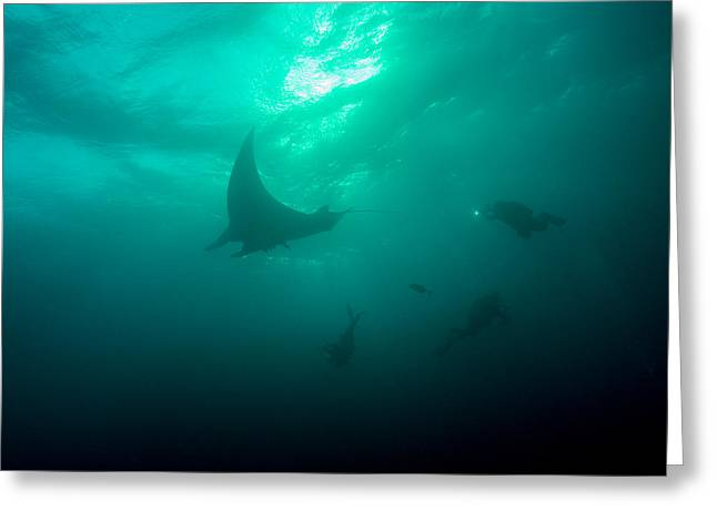 Snorkel Greeting Cards - Three Divers and a Manta Greeting Card by Brent Barnes