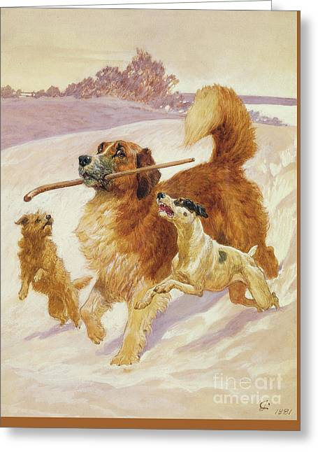 Three Dogs Playing In The Snow Greeting Card by John Charlton
