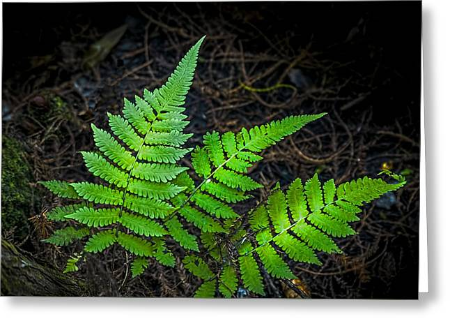 Wooden Building Greeting Cards - Three Fern Night Greeting Card by Marvin Spates