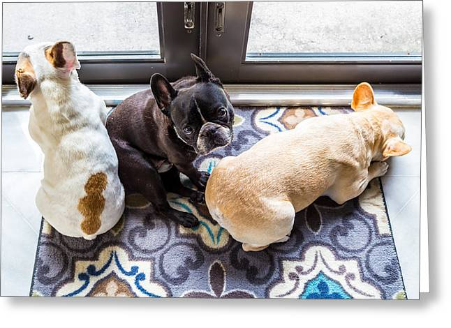 Dogs Pyrography Greeting Cards - Three French Bulldogs Greeting Card by Satoshi Kina