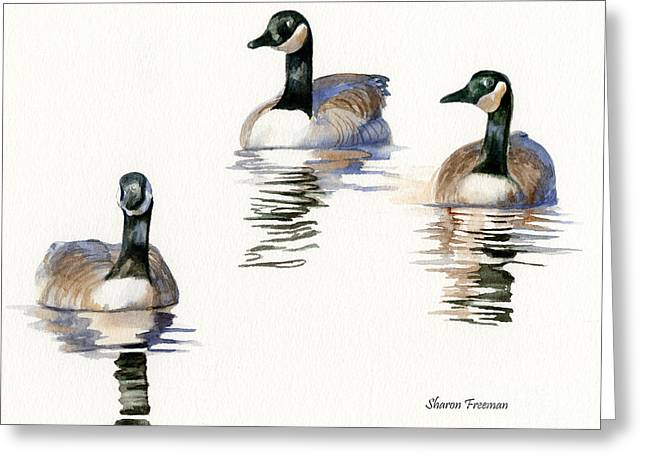 Wild Geese Greeting Cards - Three Geese with Black Necks Greeting Card by Sharon Freeman