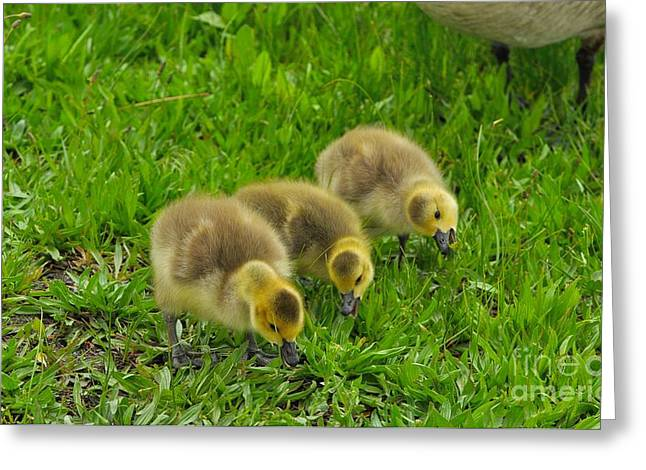 Mother Goose Greeting Cards - Three Goslings Greeting Card by Merrimon Crawford