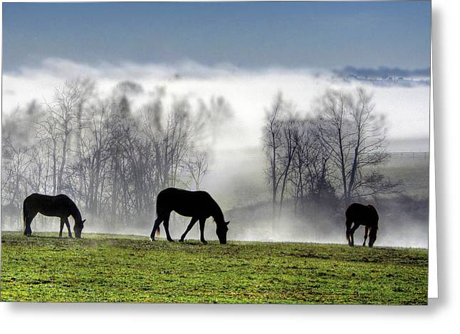Three Horse Morning Greeting Card by Sam Davis Johnson
