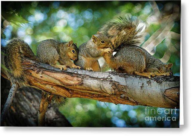 Three Is A Crowd  Greeting Card by Robert Bales