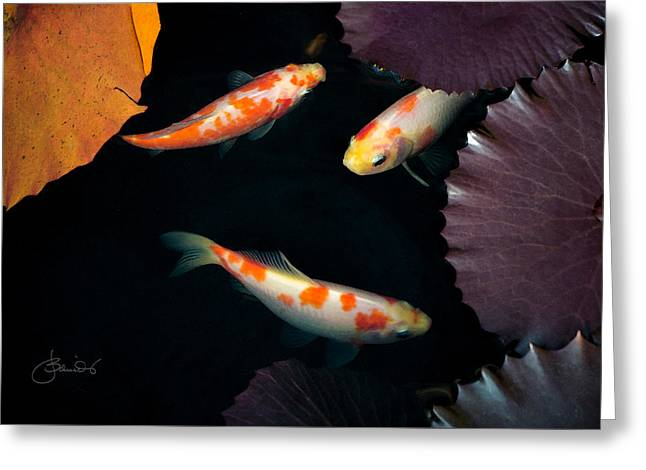 Decorative Fish Greeting Cards - Three Koi With Lily Pads Greeting Card by Judith Schmidt