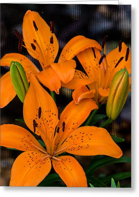 Day Lilly Greeting Cards - Three Lilies Greeting Card by Ed Gleichman