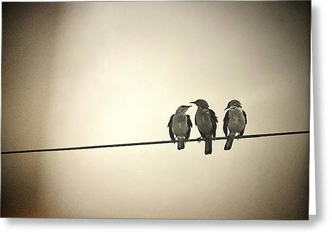 Three Little Birds Greeting Card by Trish Mistric