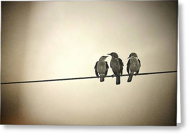 Bird Song Greeting Cards - Three Little Birds Greeting Card by Trish Mistric