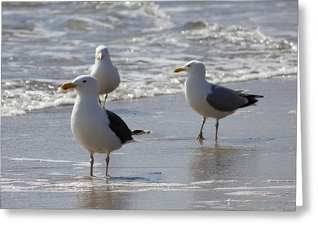 Maine Shore Greeting Cards - Three Of a Kind - Seagulls Greeting Card by Kirkodd Photography Of New England