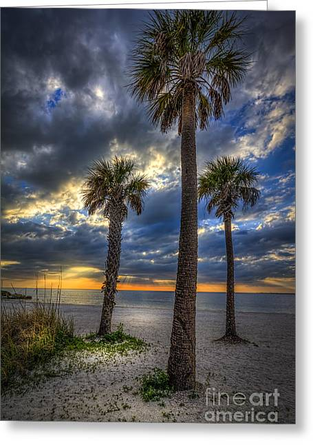 Three Palm Stew Greeting Card by Marvin Spates