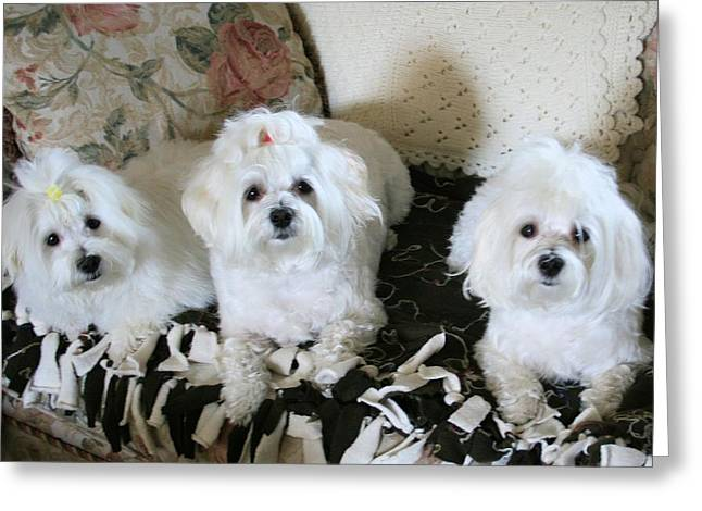 Puppies Pyrography Greeting Cards - Three Peas In A Pod Greeting Card by BJ Redmond