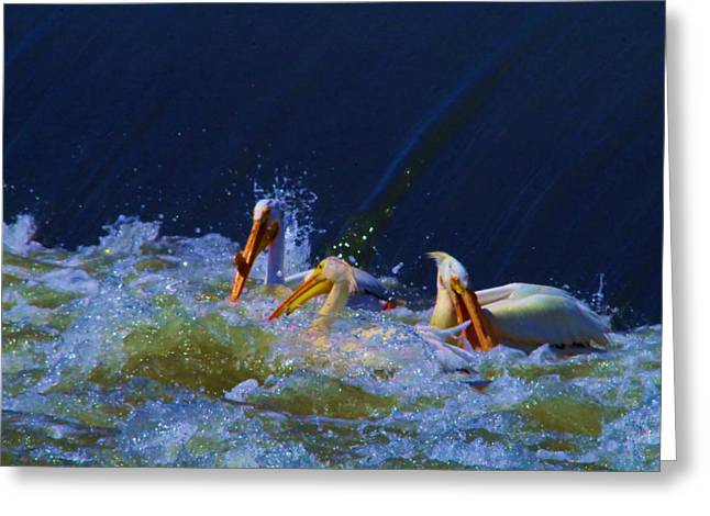 Three Pelicans Bobbing In The Water Greeting Card by Jeff Swan