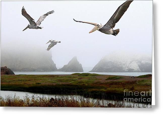 Three Pelicans Greeting Card by Wingsdomain Art and Photography