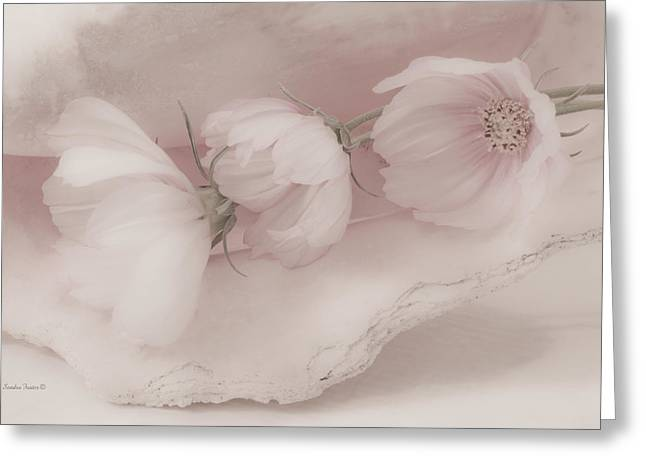 Interior Still Life Greeting Cards - Three Pink Cosmo Flowers Greeting Card by Sandra Foster