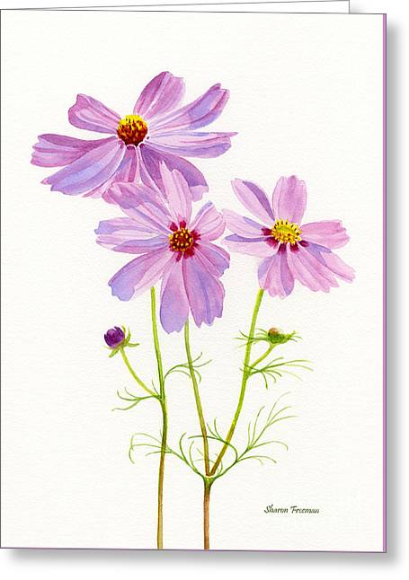 Pink Blossoms Greeting Cards - Three Pink Cosmos Blossoms 2 Greeting Card by Sharon Freeman