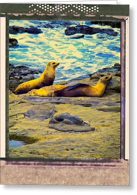 California Sea Lions Greeting Cards - Three Sea Lions Greeting Card by Dominic Piperata