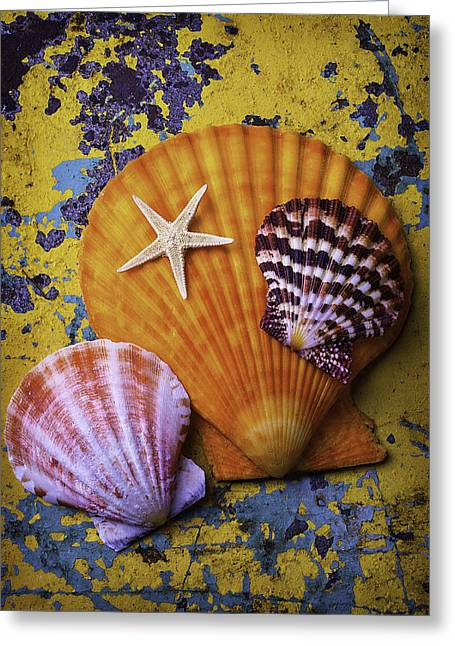 Nature Study Greeting Cards - Three Sea Shells And Starfish Greeting Card by Garry Gay