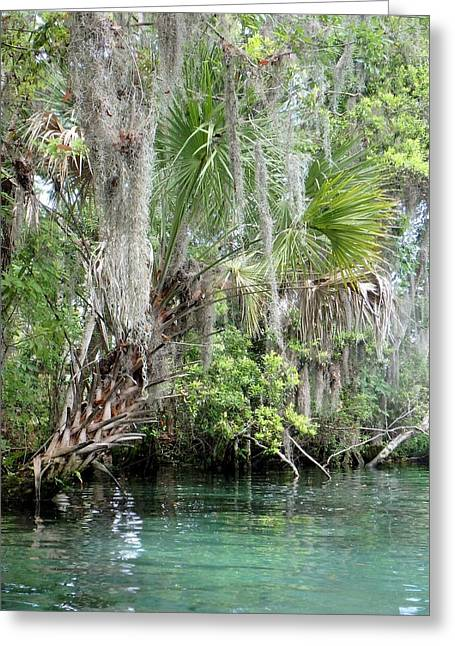 Sister Framed Prints Greeting Cards - Three Sisters Springs Palm Greeting Card by Sheri McLeroy