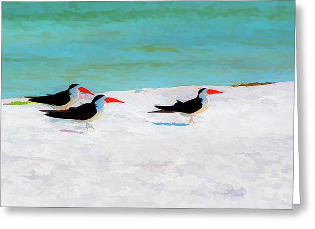 Three Skimmers Greeting Card by Marvin Spates