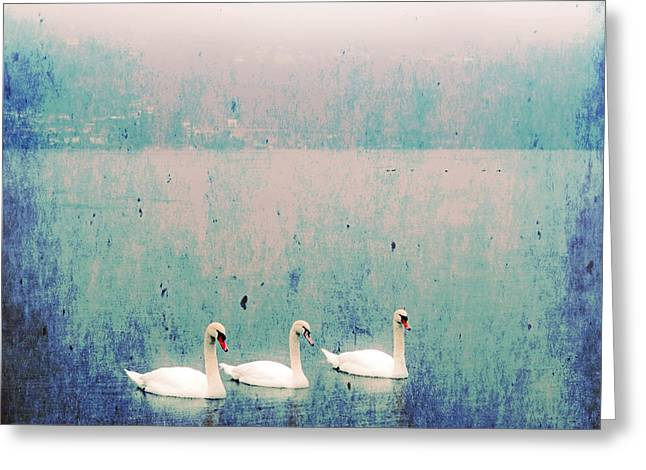 three swans Greeting Card by Joana Kruse