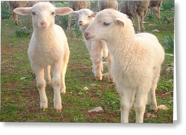 Naivety Greeting Cards - Three Tender Lambs and Five Pieces of Mutton Greeting Card by Tracey Harrington-Simpson