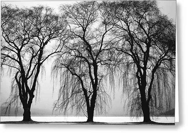 Large Trees Greeting Cards - Three Trees Greeting Card by Daniel Hagerman