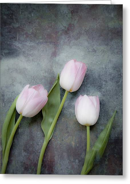 March Greeting Cards - Three tulips Greeting Card by Maria Heyens