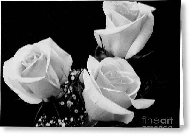 Babys Breaths Greeting Cards - Three White Beauty Roses Greeting Card by Marsha Heiken