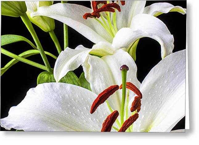 Three white lilies Greeting Card by Garry Gay
