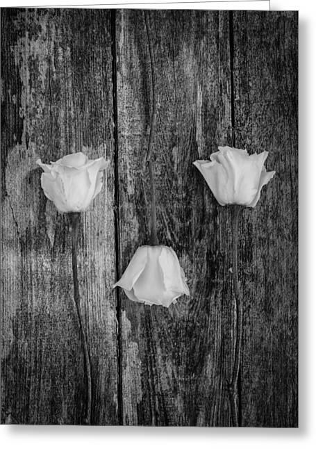 Three White Roses Greeting Card by Kim Hojnacki